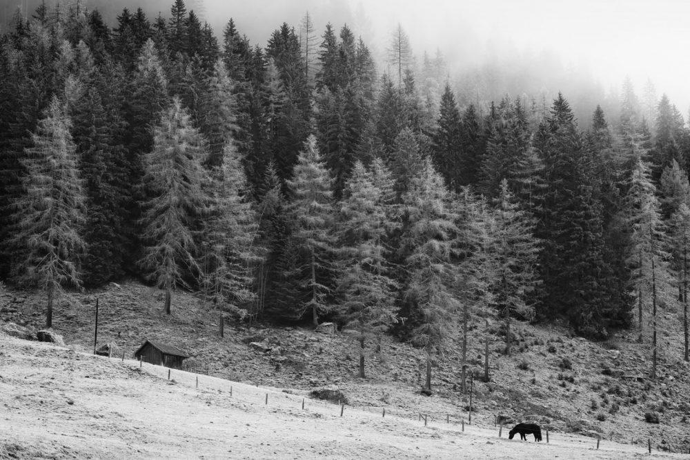 Stadel und Pferde, Obertal