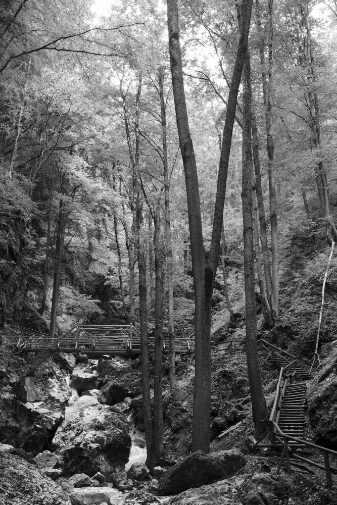 Tall Trees, Kesselfall-Klamm